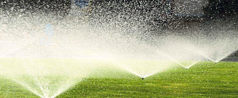 Разберете кои са сезоните за поливане на тревата